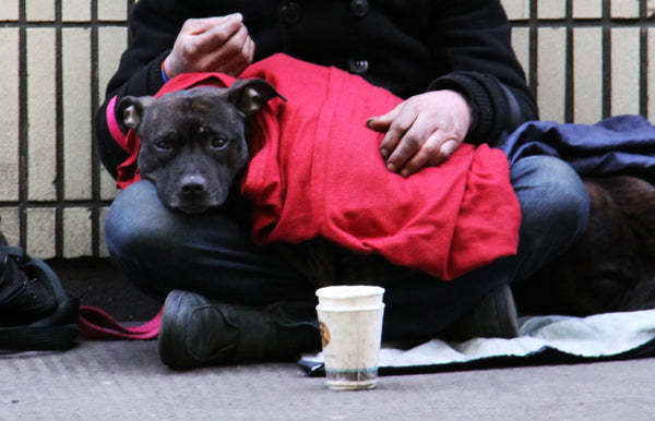 The health benefits of having a pet while homeless