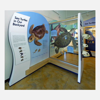 These interactive sea turtle displays were created for The Barrier Island Center in Brevard County, Florida.