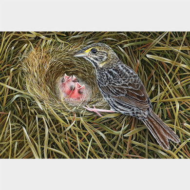 This beautiful illustration of a Cape Sable seaside sparrow, Ammodramus maritimus mirabilis, with chicks, is biologically accurate in detail.