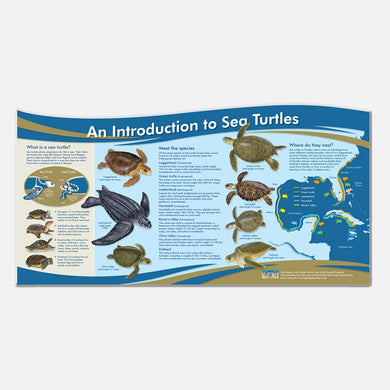 The sea turtle illustrations in this educational display are photo realistic and accurate in detail.