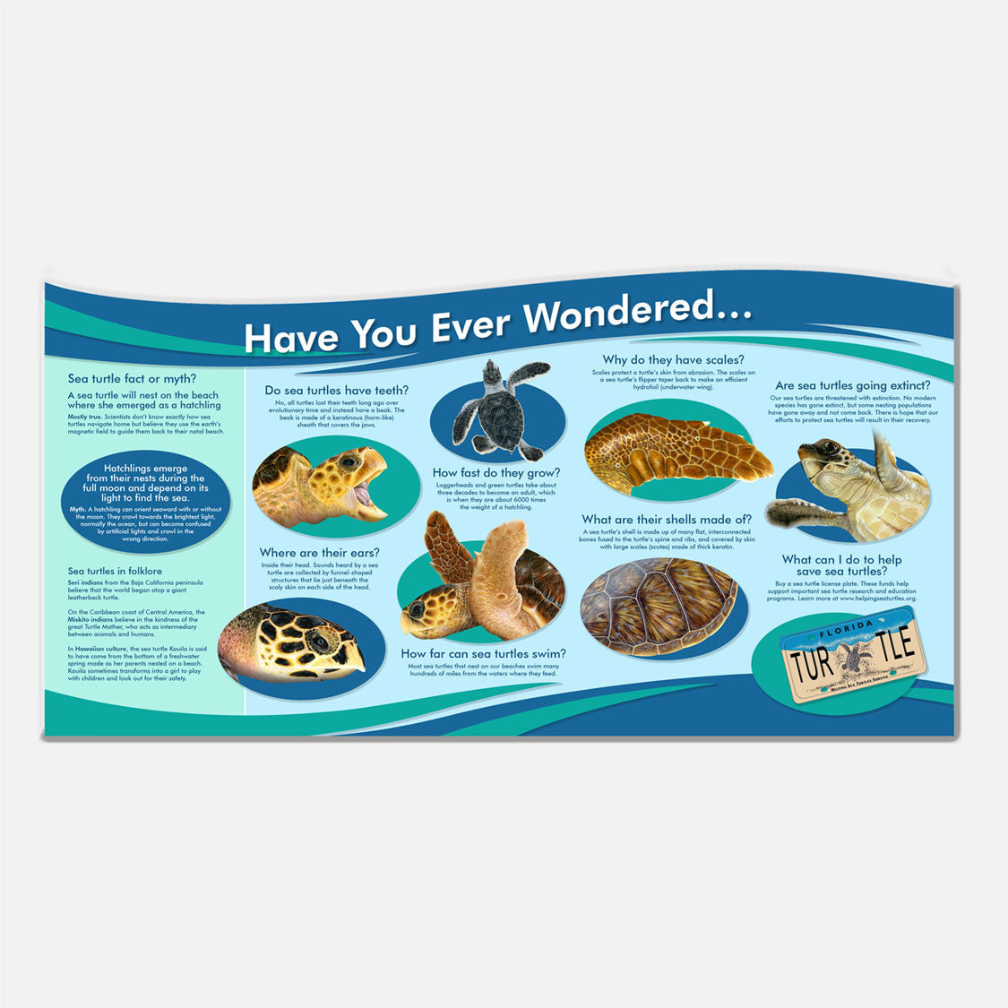 Sea turtle information and fun facts display panel