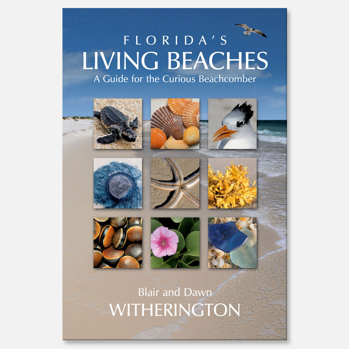 Florida's Living Beaches
