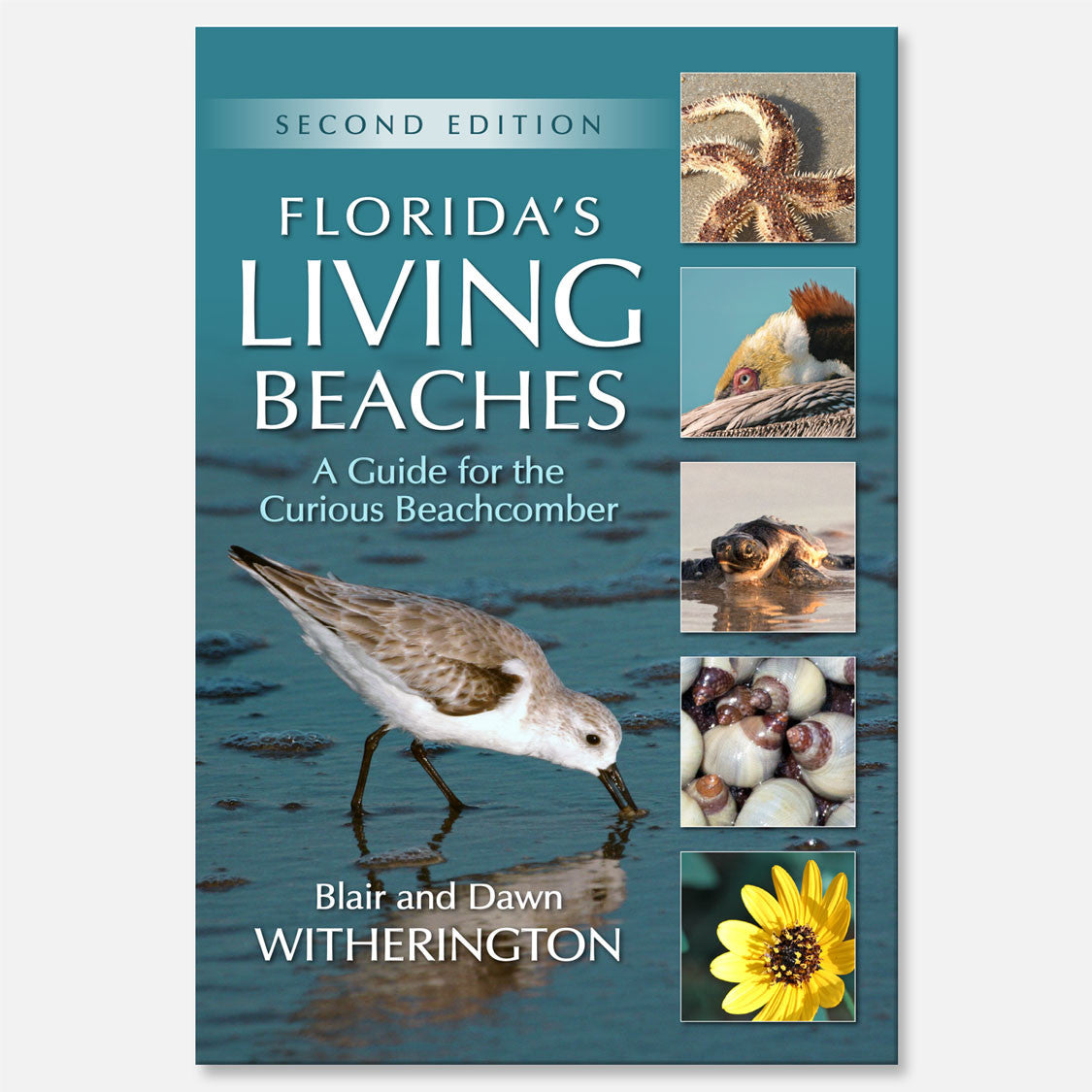 Florida's Living Beaches (2nd Edition) by Blair and Dawn Witherington