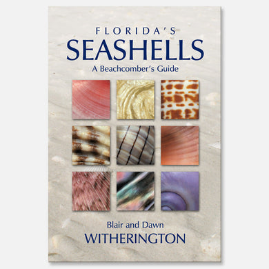 Florida's Seashells by Blair and Dawn Witherington