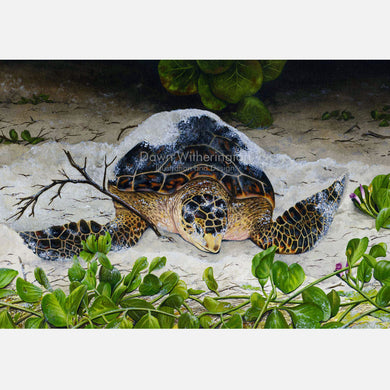 This beautiful illustration of a nesting hawksbill sea turtle, Eretmochelys imbricata.