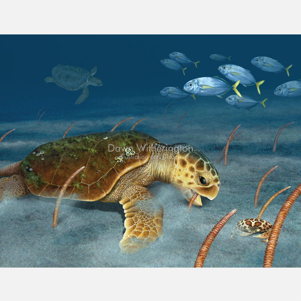 This beautiful illustration of a loggerhead sea turtle (Caretta caretta) eating pipe cleaner sea pens (Virgularia presbytes) is accurate in detail.