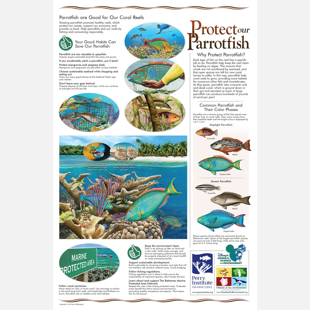 This beautiful poster provides information on the protection of parrotfish (Scaridae) in the Bahamas.