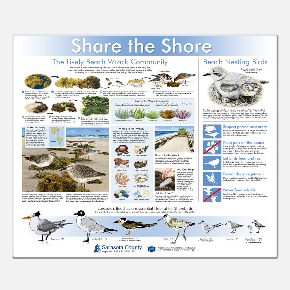 This beautifully illustrated informational/identification display emphasizes beach wrack and its connection to Florida shorebirds.