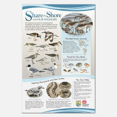 This beautifully illustrated educational display describes and identifies birds and other animals of southeastern US beaches.