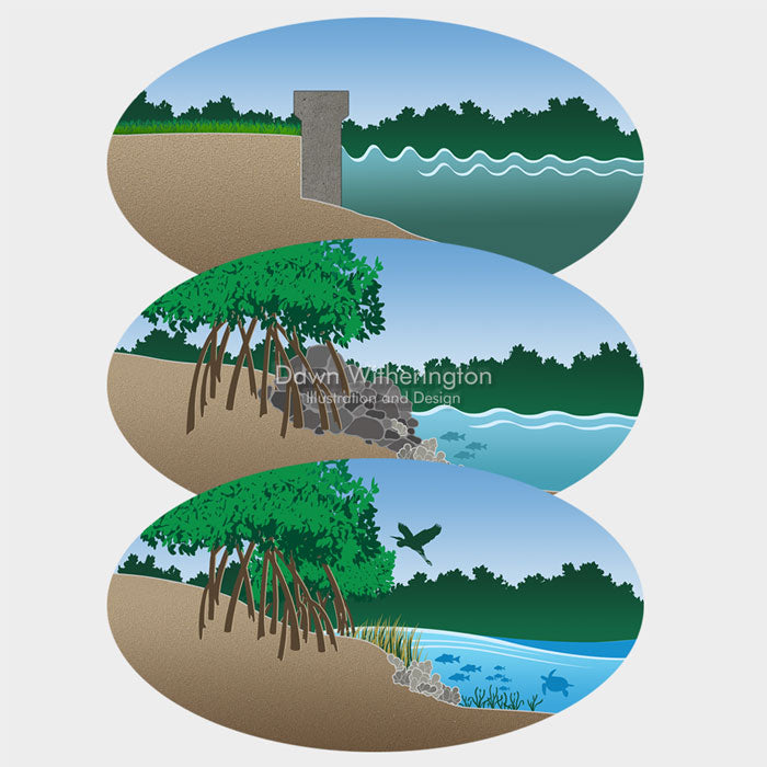 Graphic of different shoreline types