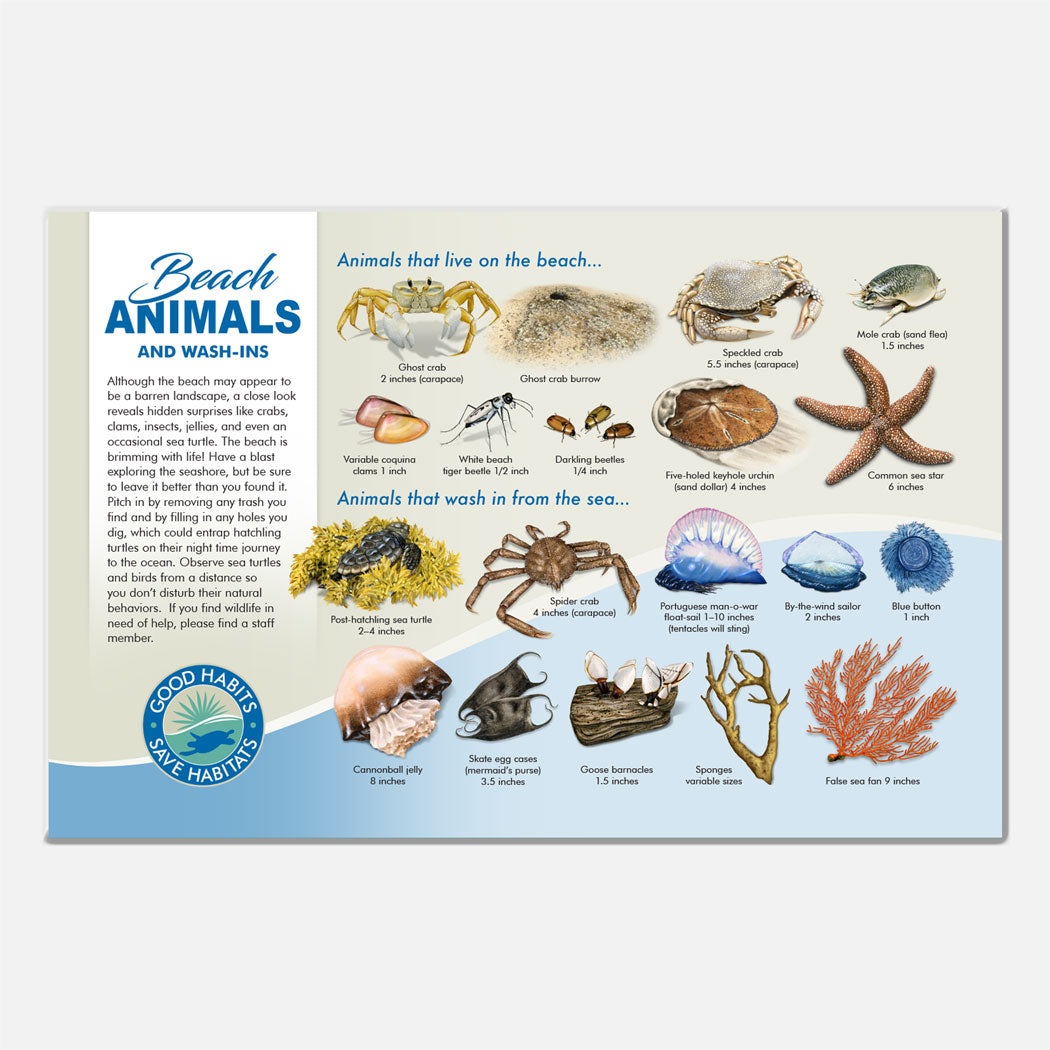 This beautiful beach animals identification deck sign was created for The Barrier Island Center, an environmental education facility located in Brevard County, Florida.