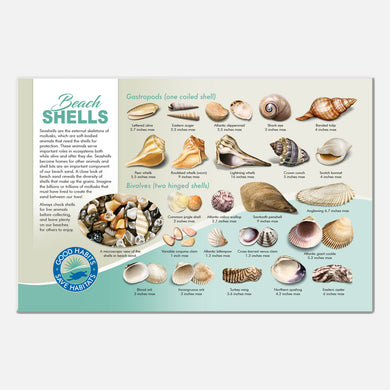 This beautiful seashells deck signage was created for The Barrier Island Center, an environmental education facility located in Brevard County, Florida.