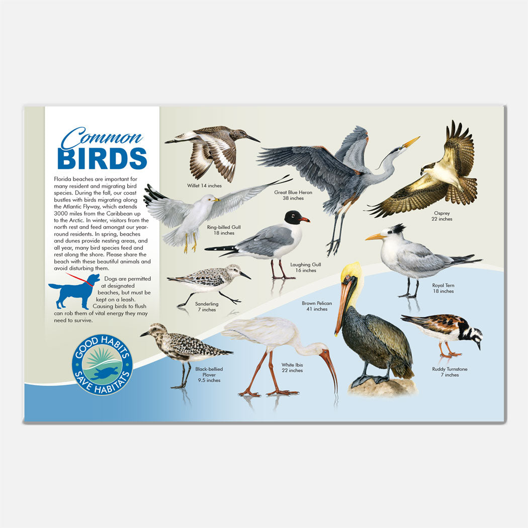 This beautiful beach bird identification deck sign was created for The Barrier Island Center, an environmental education facility located in Brevard County, Florida.
