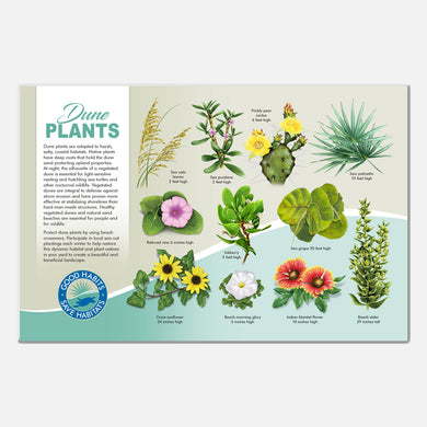 This beautiful beach plants identification deck sign was created for The Barrier Island Center, an environmental education facility located in Brevard County, Florida.