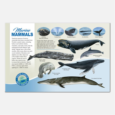 This beautiful marine mammals deck signage was  created for The Barrier Island Center, an environmental education facility located in Brevard County, Florida.