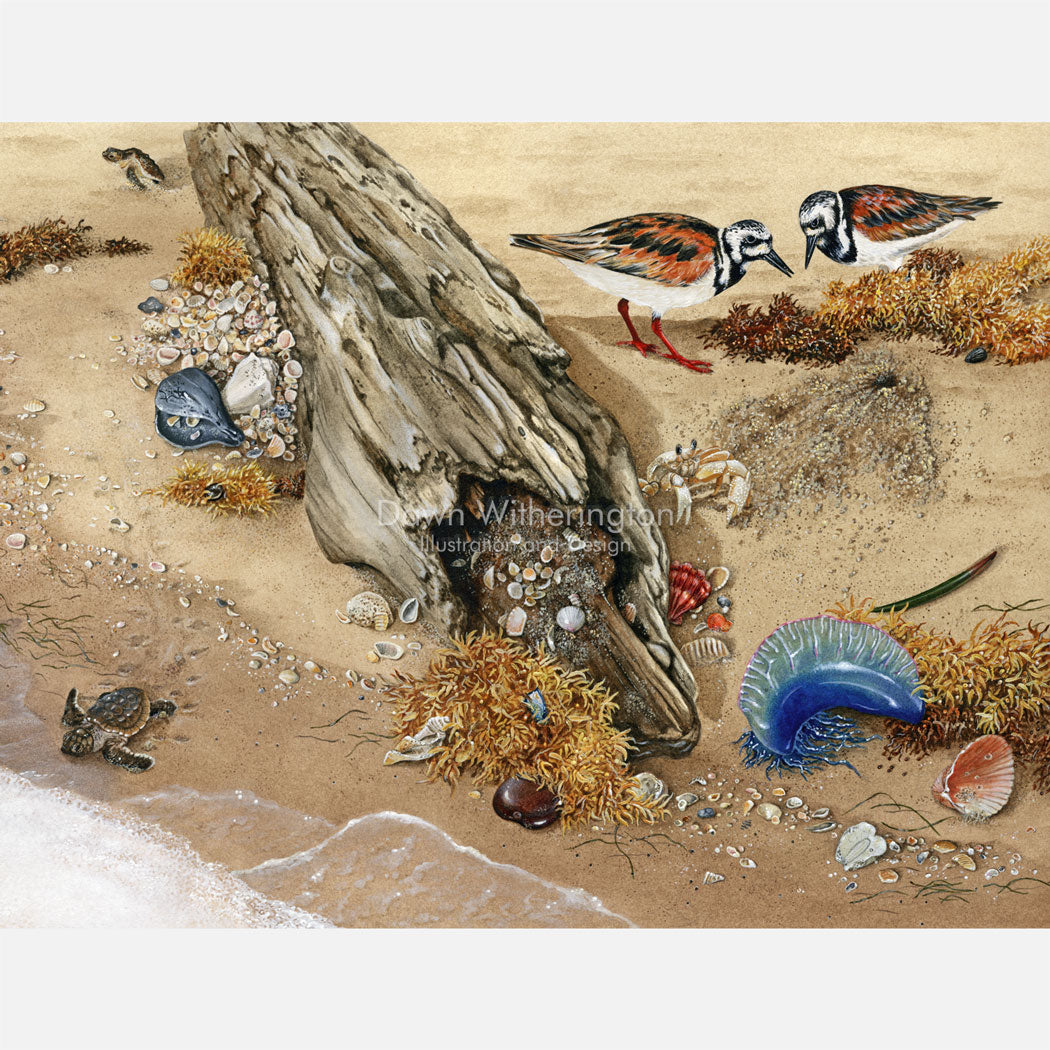 This is an illustration of ruddy turnstones (Arenaria interpres), loggerhead sea turtle (Caretta caretta) hatchlings, and various other items in the beach wrack.