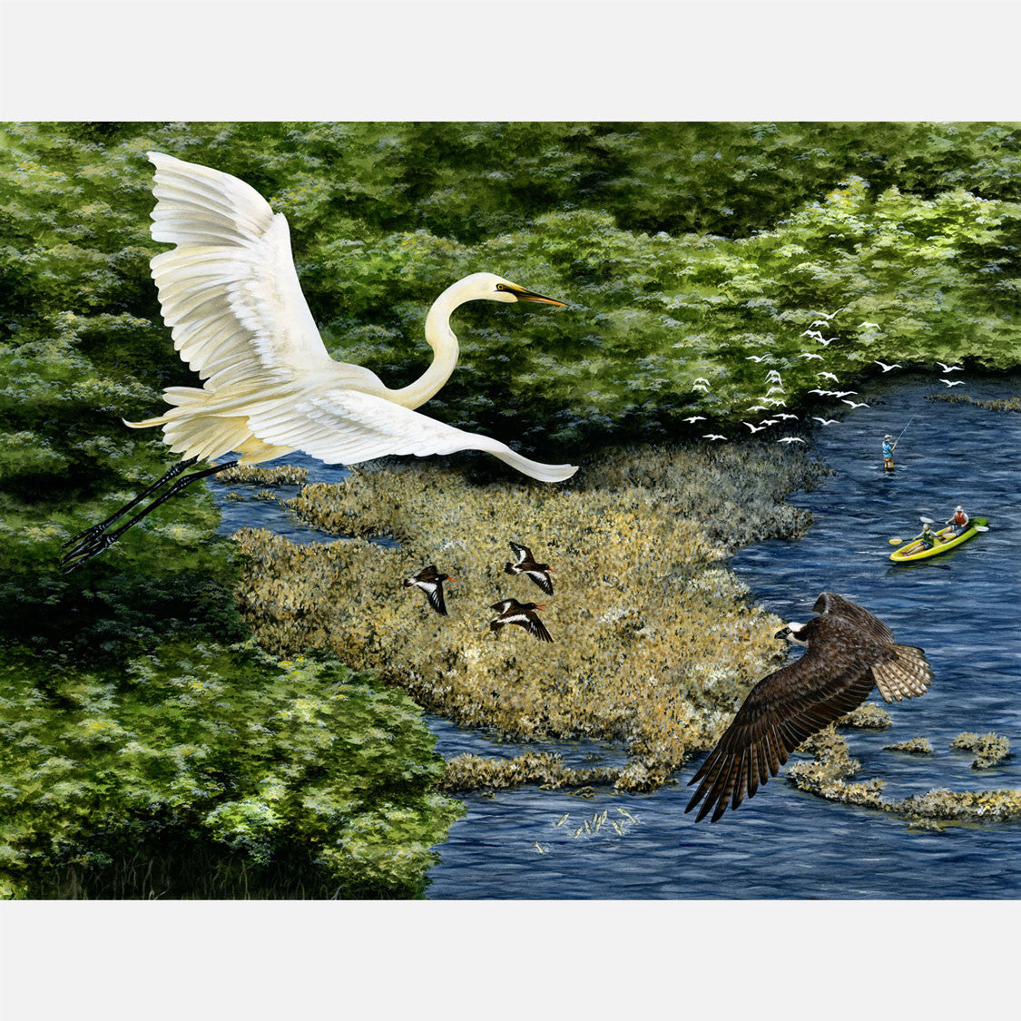 This beautiful, highly detailed and accurate illustration is of an oyster reef from a bird's eye view featuring a great egret and an osprey.