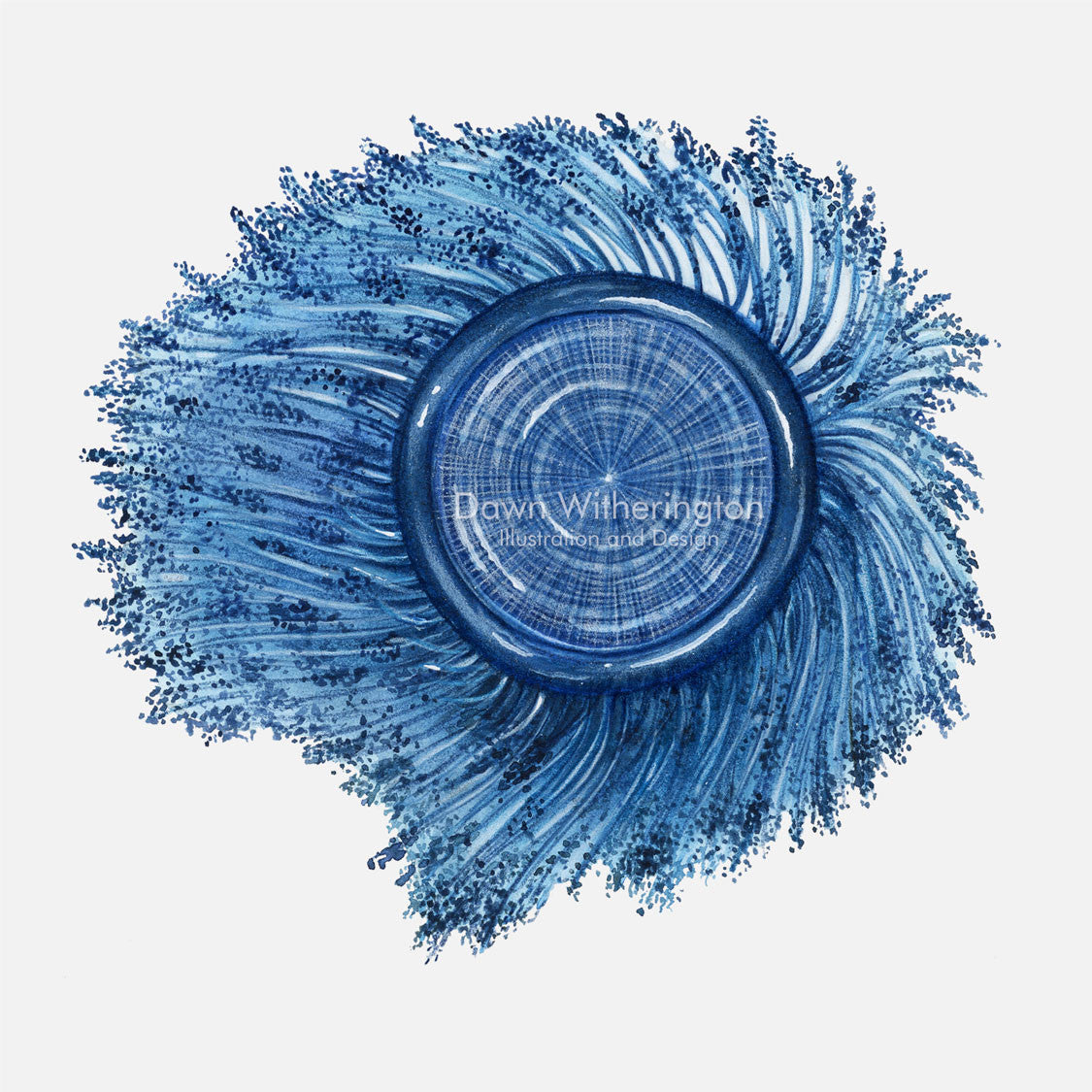 This beautiful illustration of a stranded blue button, Porpita porpita, is accurate in detail.
