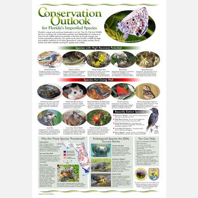 This beautiful poster provides information on the conservation of Florida's imperiled wildlife.