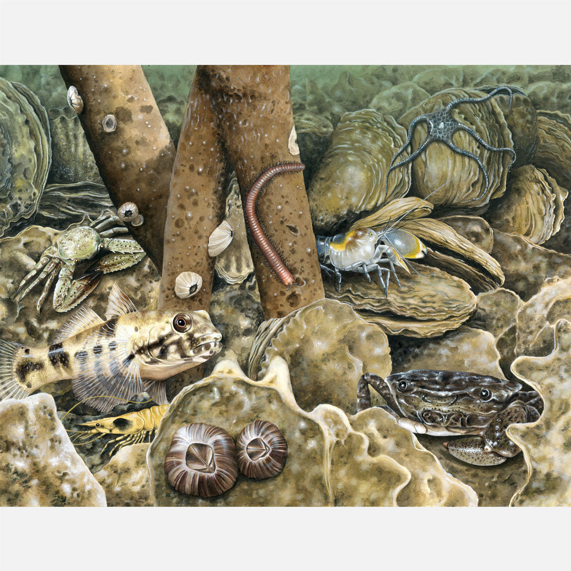 This beautiful, highly detailed and accurate illustration is of an oyster reef from a crab's eye view.