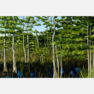 This beautiful, highly detailed illustration of a Florida cypress stand.