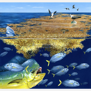 This beautiful illustration of animals associated with the sargassum community is biologically accurate in detail.