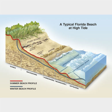 This graphic shows the anatomy of a Florida beach.