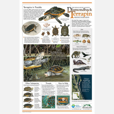 This beautiful poster provides information and identification on the east coast diamondback terrapin (Malaclemys terrapin tequesta).