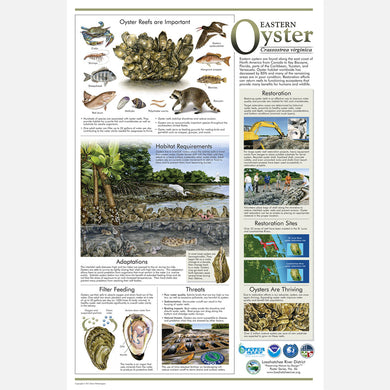 This beautiful poster provides information about the eastern oyster, Crassostrea virginica, with an emphasis on restoration.