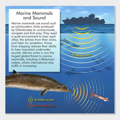 This graphic describes echolocation in marine mammals.