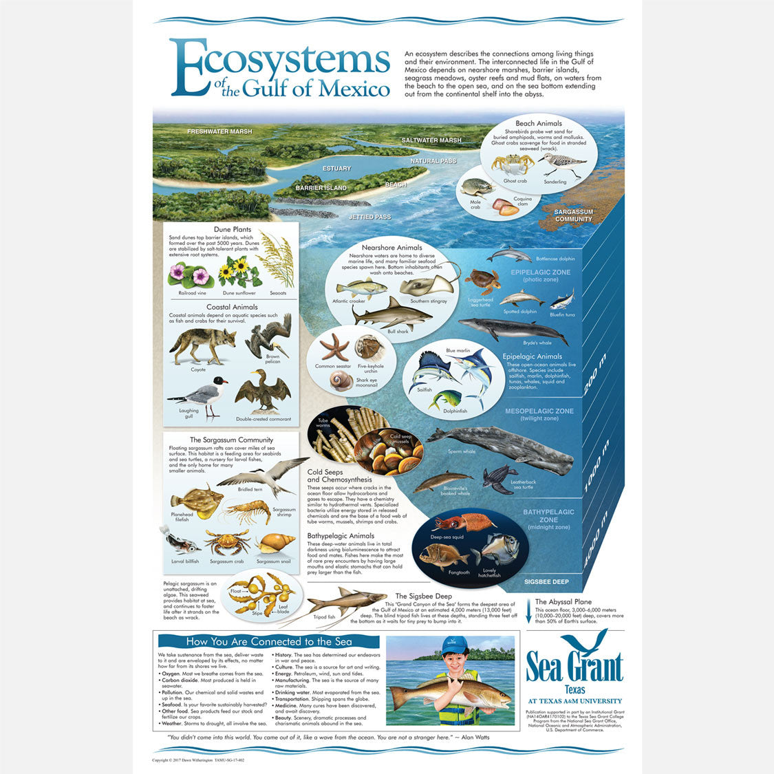 This beautiful poster provides information on the ecosystems of the Gulf of Mexico and how the are connected.
