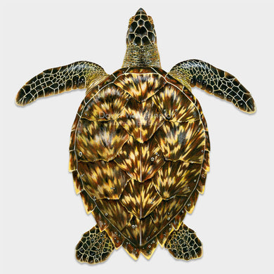 This beautiful drawing of a juvenile hawksbill sea turtle, Eretmochelys imbricata, is biologically accurate in detail.