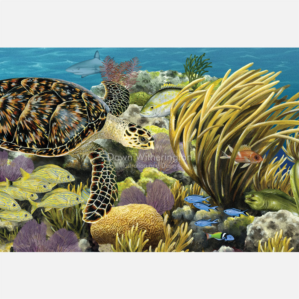This beautiful, highly detailed illustration is of a hawksbill sea turtle, Eretmochelys imbricata, swimming over an Atlantic coral reef.