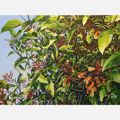 This beautiful illustration of a firebush, Hamelia patens, and the life this large bush attracts is biologically accurate in detail.