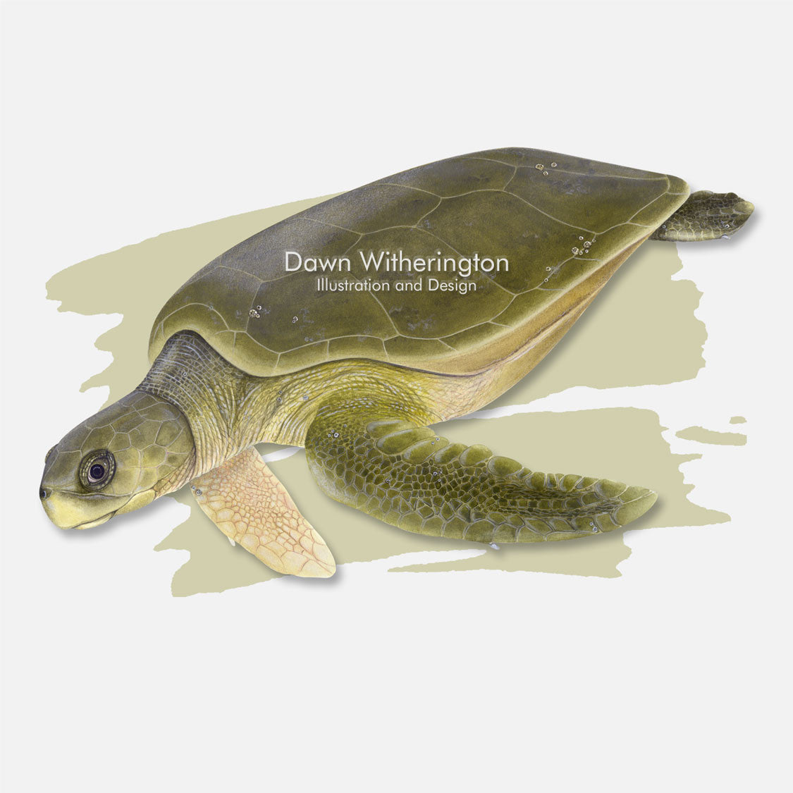 This beautiful illustration is of a flatback sea turtle, Natator depressus, over a swash graphic.