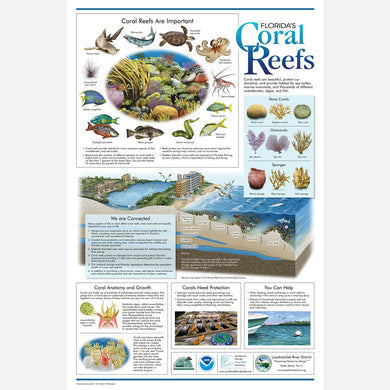 This beautiful poster provides information about the importance of Florida's coral reefs.