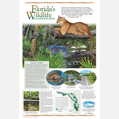 This beautiful poster provides information about Florida's wildlife. The poster features a Florida panther over a river with associated plants and animals.