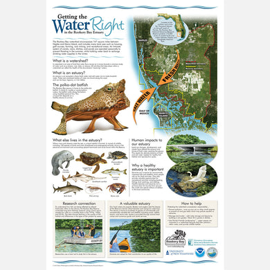 This beautiful poster provides information on the importance of the Rookery Bay estuary and watershed.
