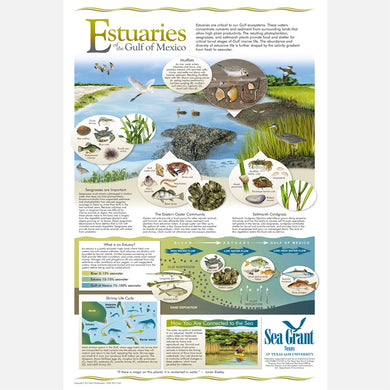 This beautiful poster provides information on Estuaries of the Gulf of Mexico.