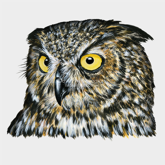 This wonderful Illustration of a great horned owl (Bubo virginianus) is accurate in detail.