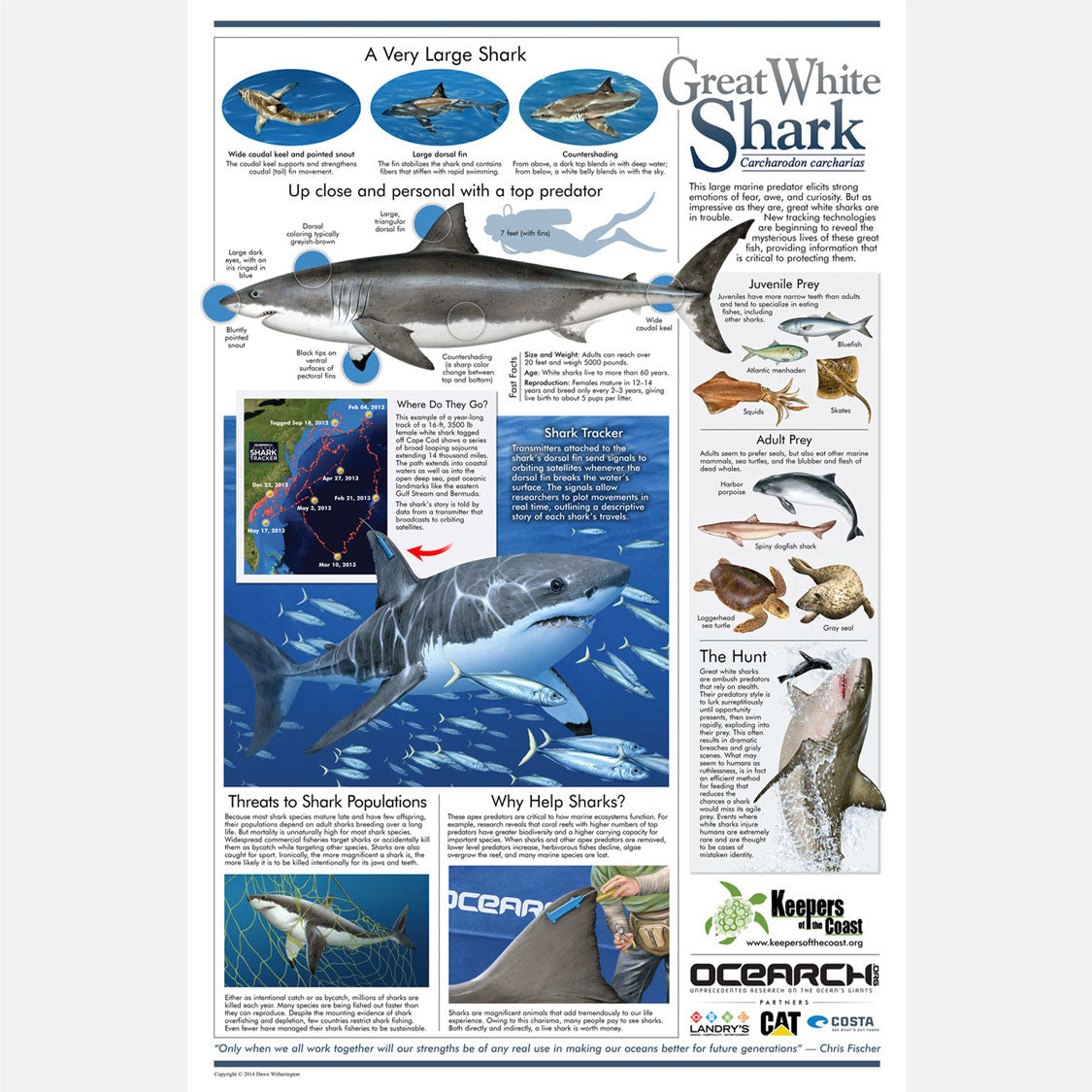 This beautiful poster provides information about the great white shark, Carcharodon carcharia, with an emphasis on migration.