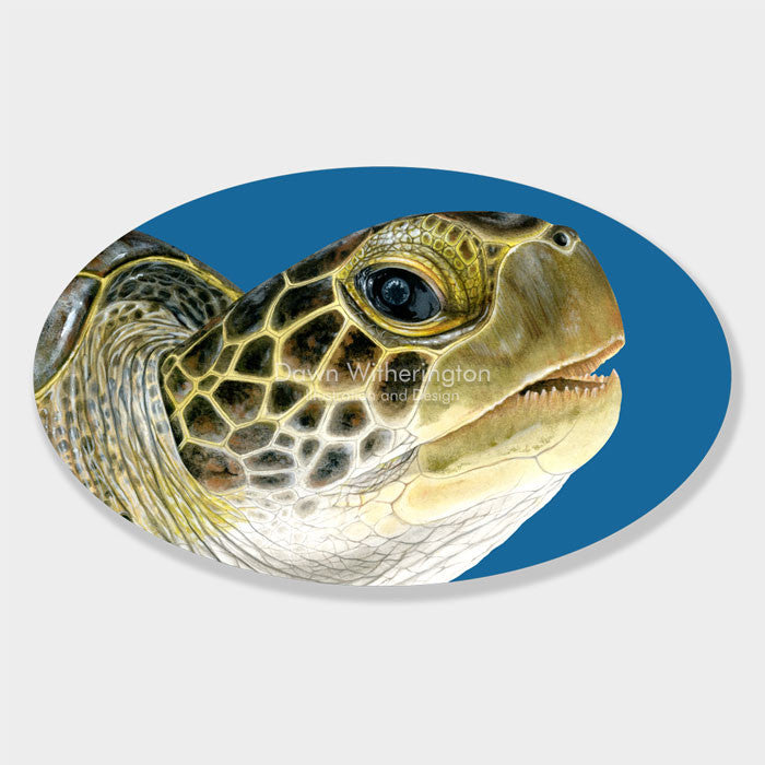 This beautiful drawing of an oceanic juvenile green sea turtle, Chelonia mydas, is biologically accurate in detail.