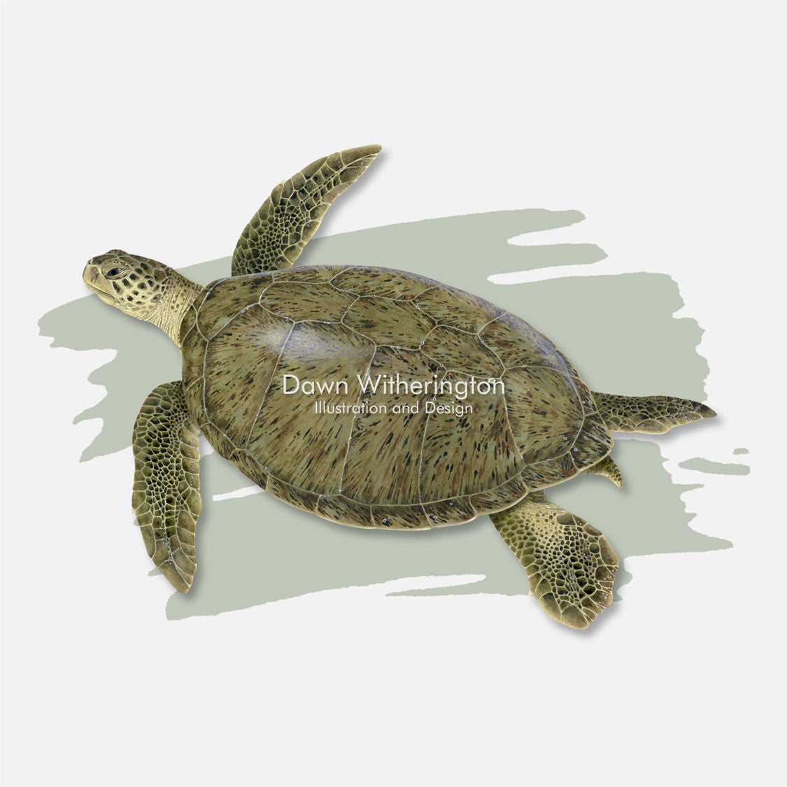 This beautiful illustration of a green turtle, Chelonia midas, is over a swash graphic.