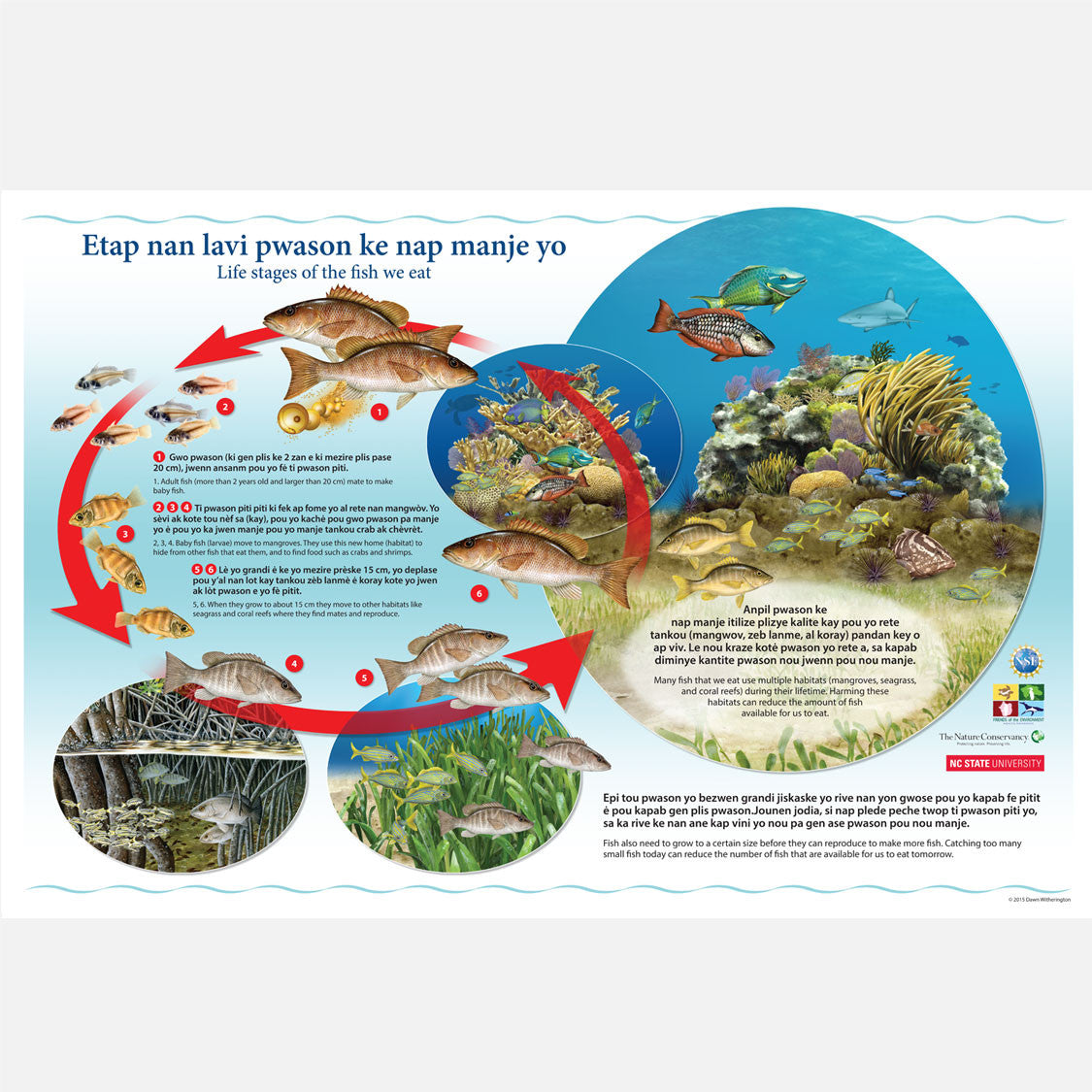 This beautiful poster provides information explaining the importance of fish habitats for Haitian fishermen.
