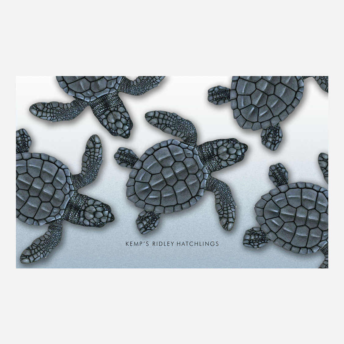 This design is an illustration of Kemp's ridley sea turtle hatchlings, Lepidochelys kempii.