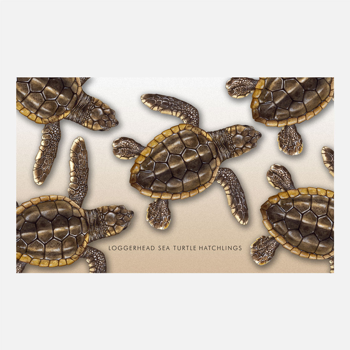 This design is an illustration of loggerhead sea turtle hatchlings, Caretta caretta.