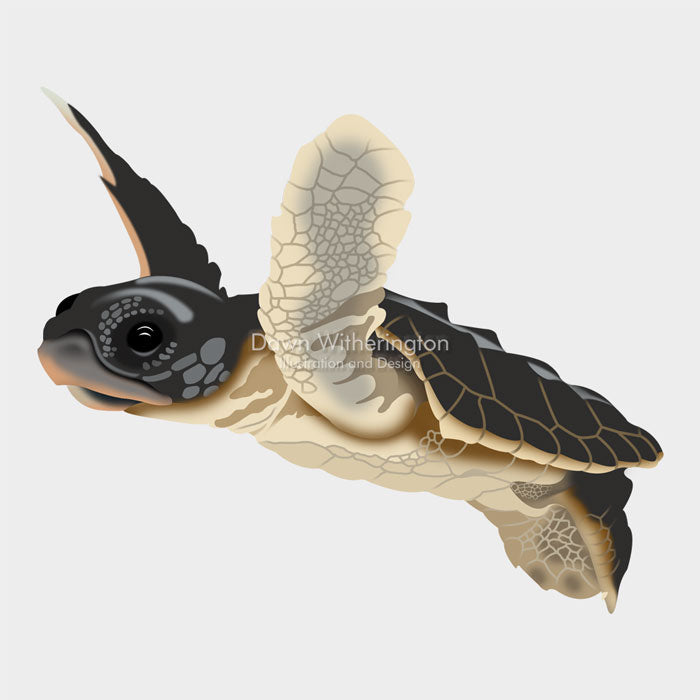 This is a cute graphical illustration of a loggerhead sea turtle hatchling (Caretta caretta).