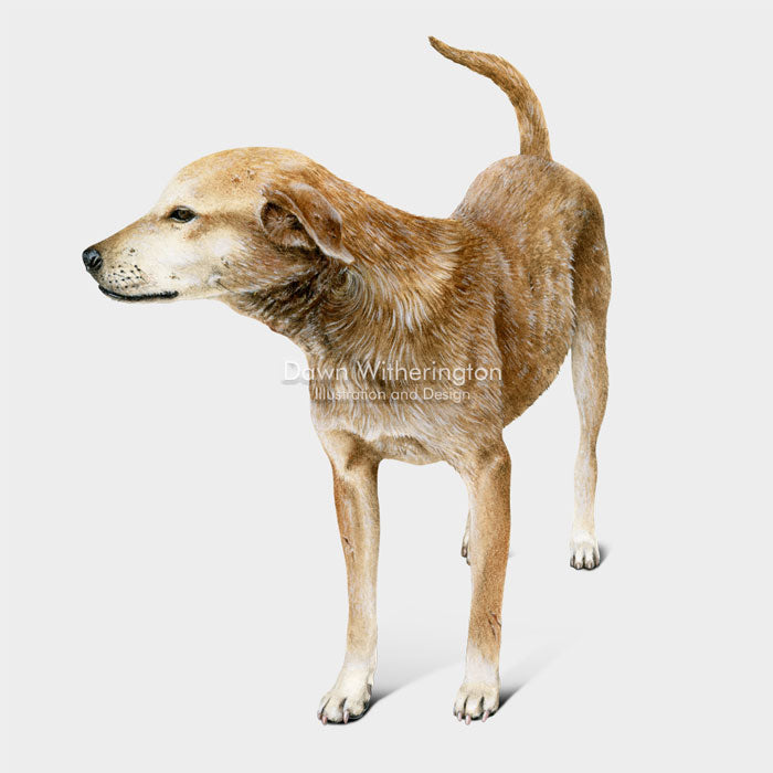 This lovely drawing of a Hatian street dog, is beautifully detailed.
