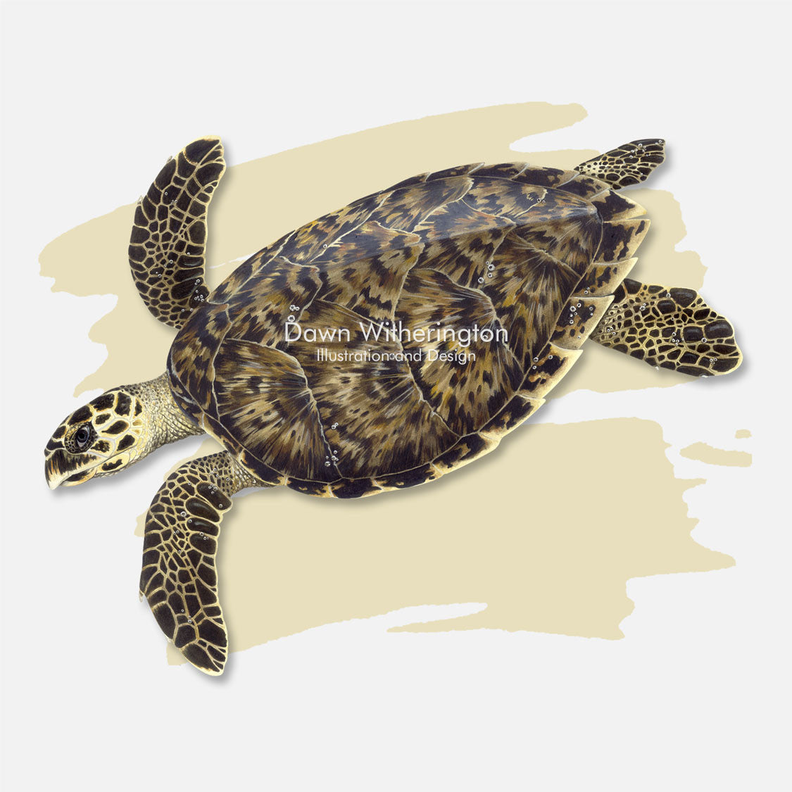 This beautiful illustration is of a hawksbill sea turtle, Eretmochelys imbricata, over a swash graphic.