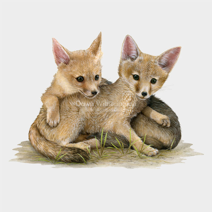 Kit fox kits